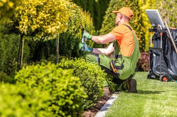Comment démarrer une pelouse à partir de graines