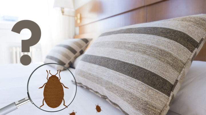 Comment vérifier les punaises de lit en auto-inspectant votre maison ou votre appartement